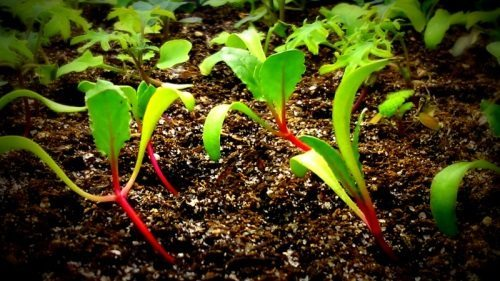 Starting Seeds & Caring for Seedlings
