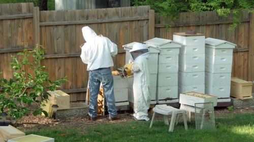 Beekeeping for your Backyard or Homestead