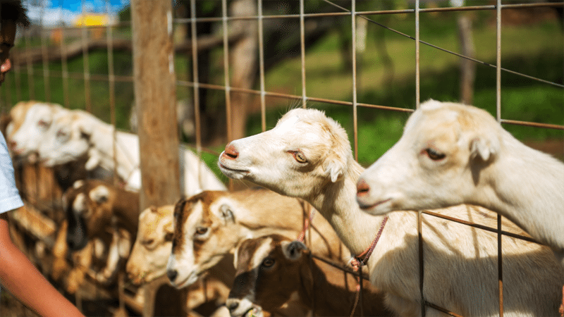Why You Need Goats and What You Need to Get Started