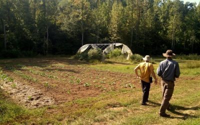 Noah Sanders' Journey to Homesteading and Farming