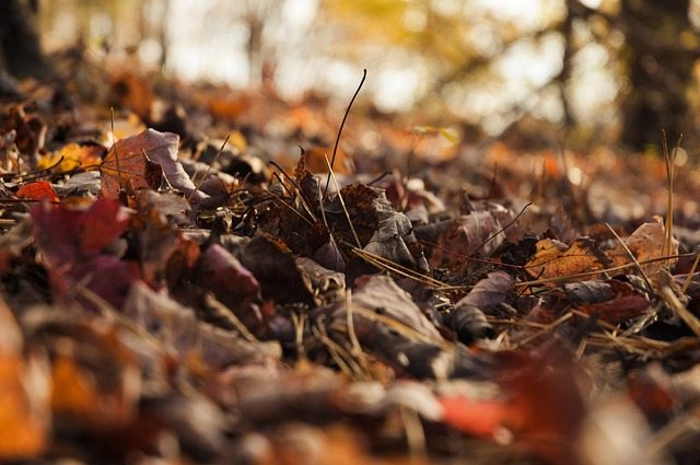 autumn, leaves, ground