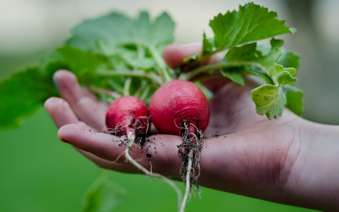 How to Grow More Food, Starting Today